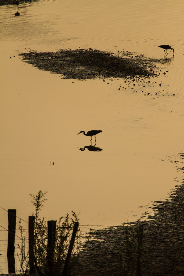wpid-04_egret-on-water.jpg